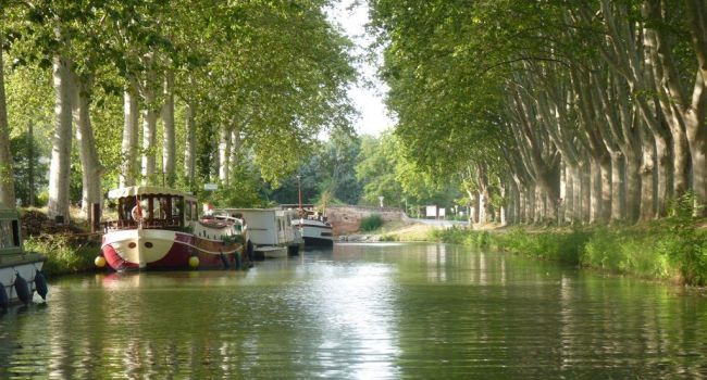 Travaux d'abattages le long de la piste cyclable du canal du midi